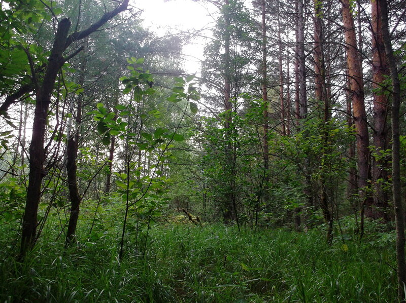 http://img-fotki.yandex.ru/get/9088/79794478.47/0_9604b_adbbc825_XL.jpg