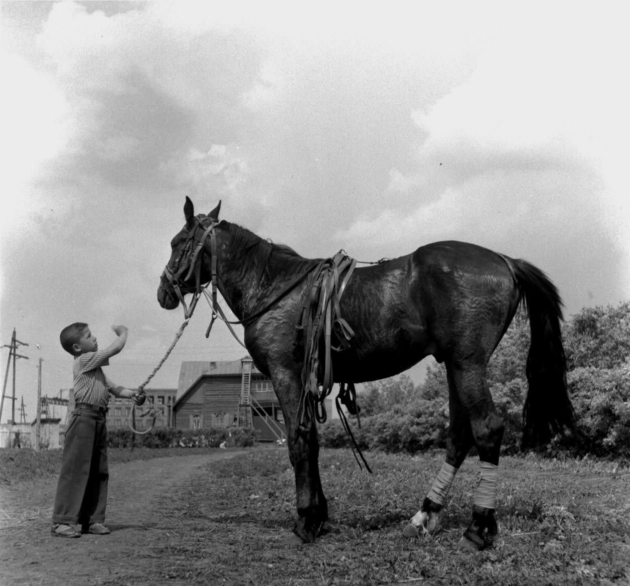 Мальчик держит лошадь под уздцы