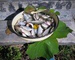 Будет рыбный день!