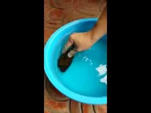 Ядовитая рыба для блюда фугу