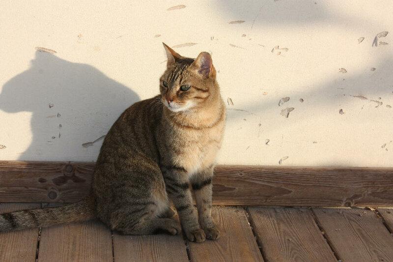 Утренний кот