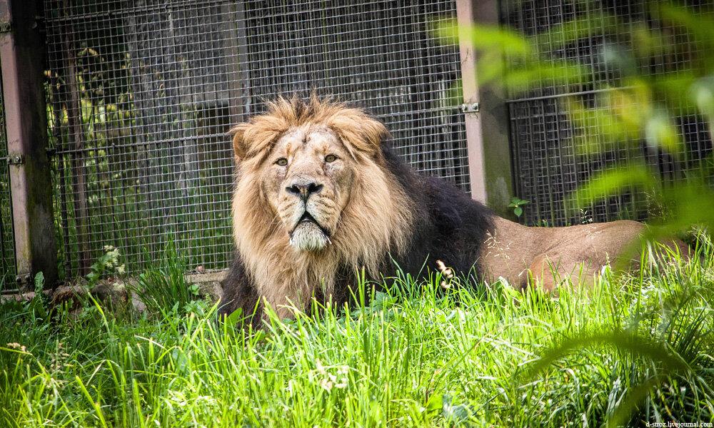 Хельсинки зоопарк