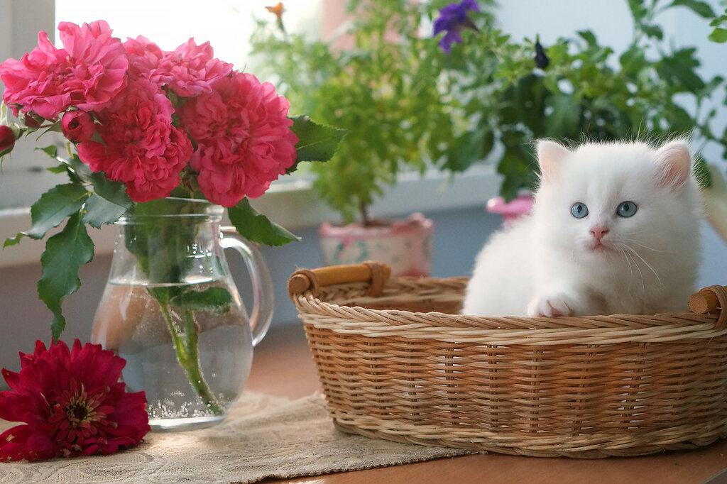Натюрморты с кошками!) Удачно вписались!