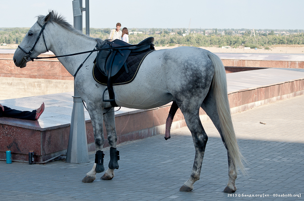 Фото хуй коня