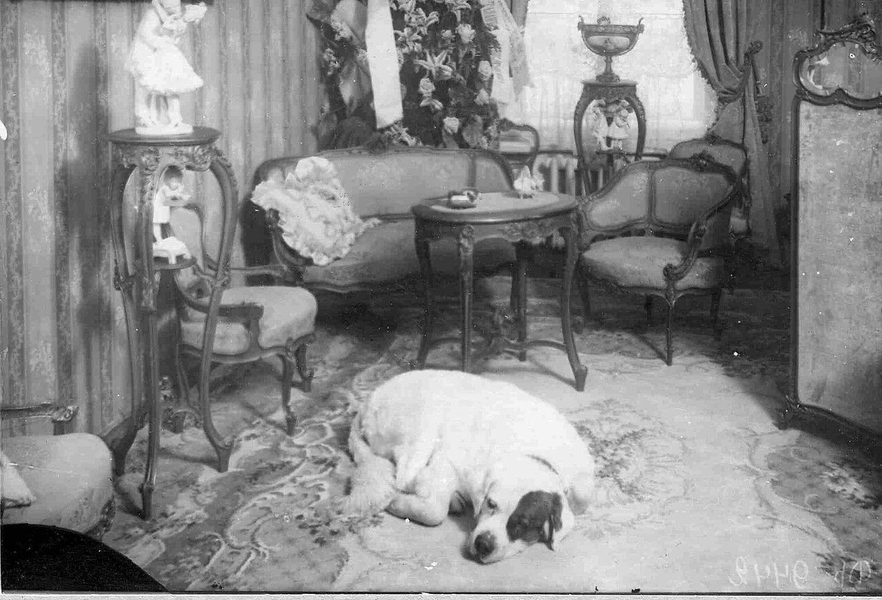 Интерьер комнаты; на первом плане - собака артистки