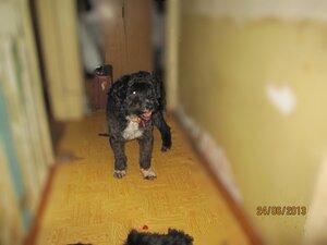 Донне очень нужна помощь квартирной передержкой - Страница 6 0_b45da_539dff64_M
