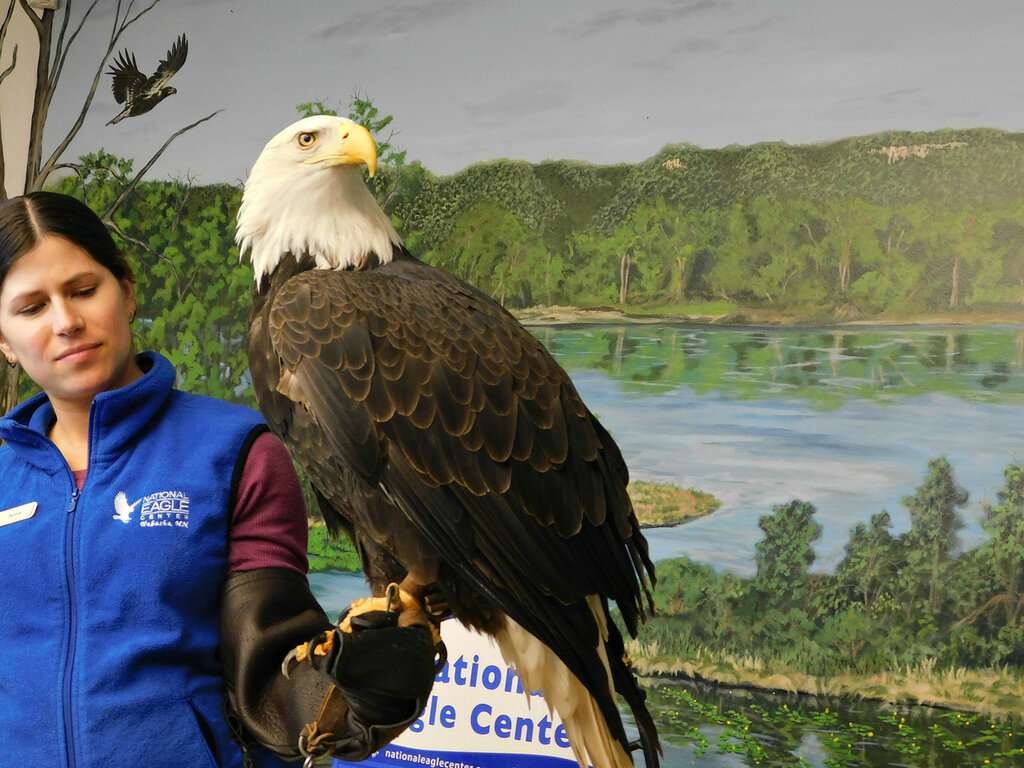 National Eagle Center, Angel