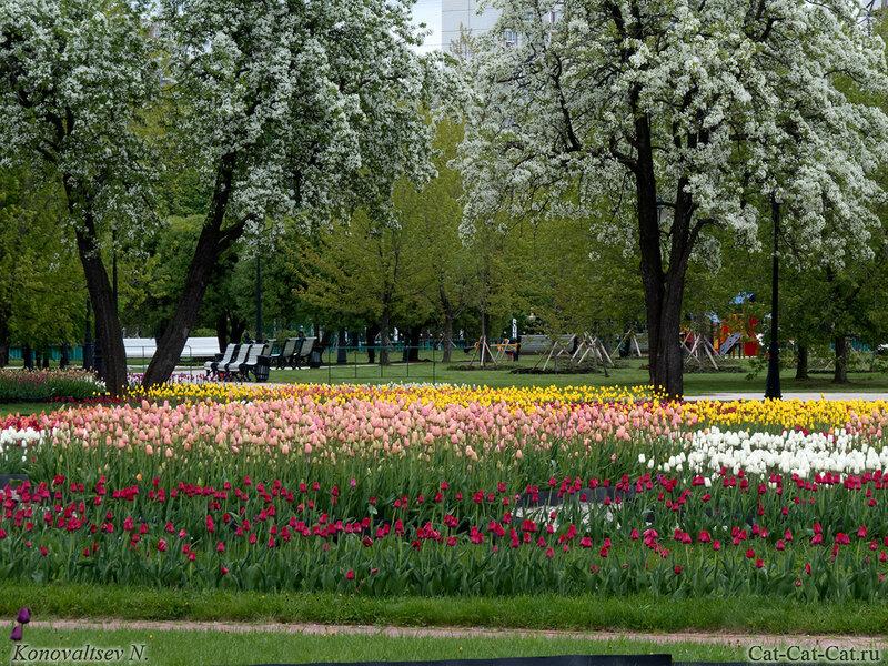 Цветение тюльпанов в Царицынском парке-заповеднике 2018