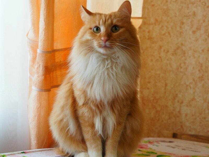 Котик из Печорского общежития
