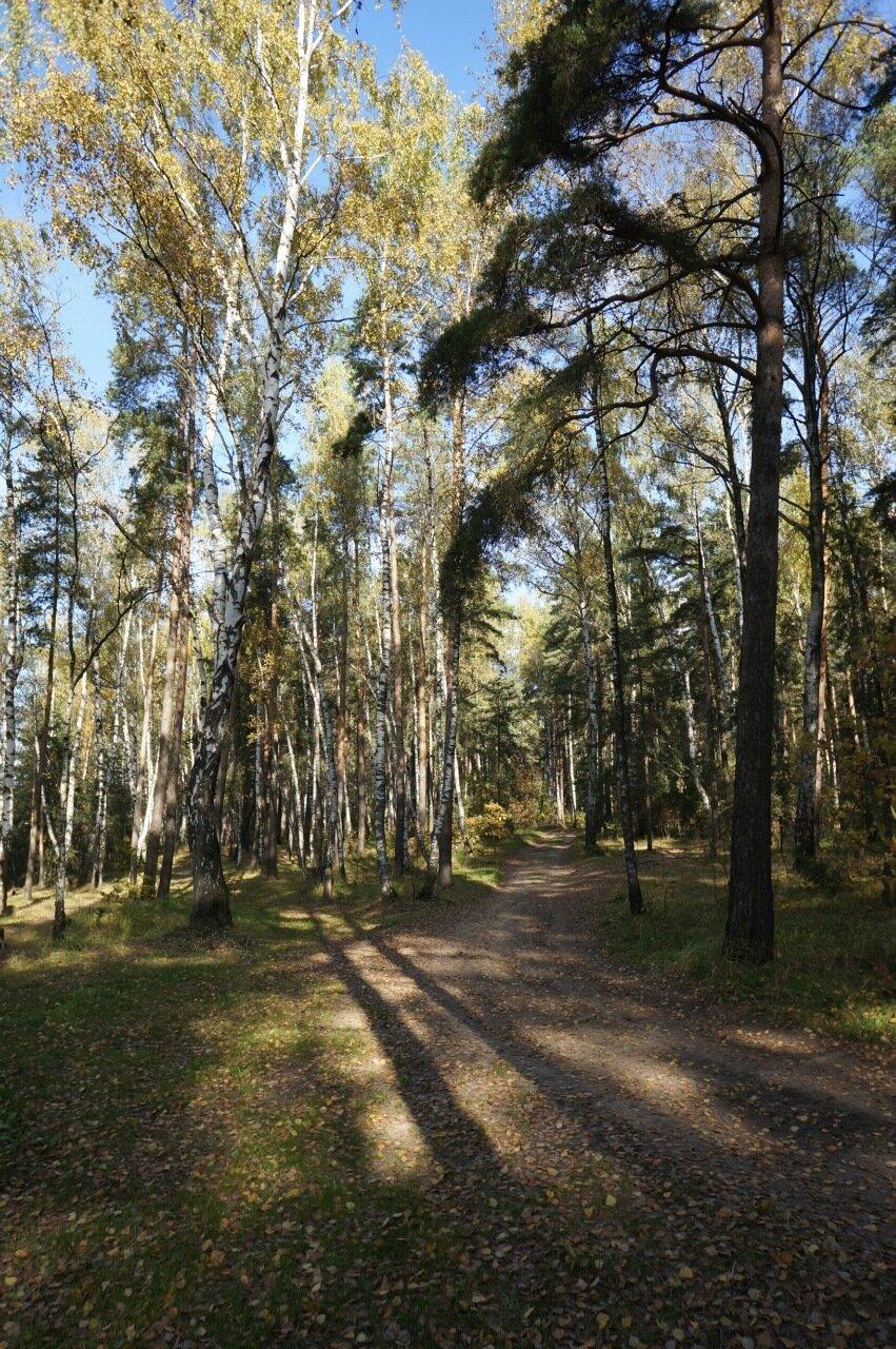 Воскресенье, осень, лес