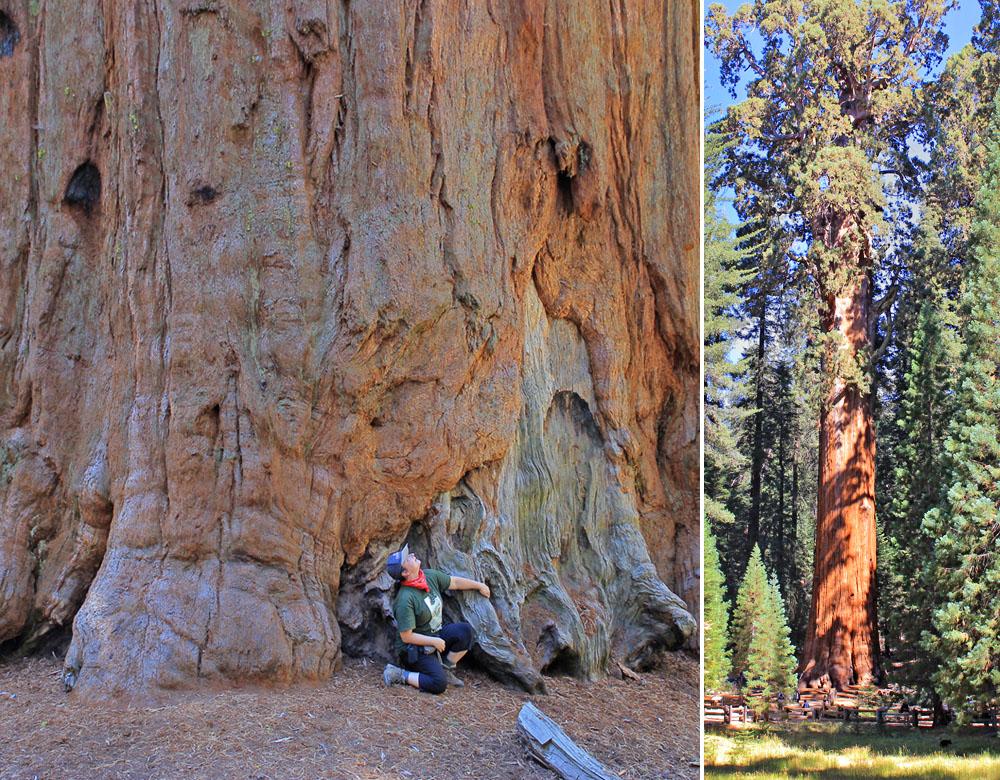 sequoia_8_by_Slava.jpg