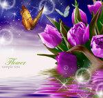 Tulips (3).jpg