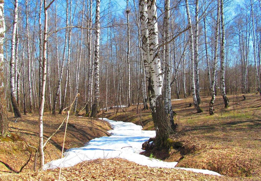 Только в ложбинах, в глубокой тени, Снежные клочья остались одни (Евгения Трутнева)