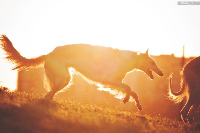 пофотографирую Ваших собак! 0_15f334_f687119f_orig