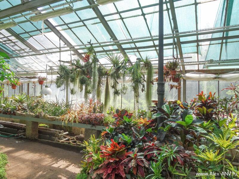 Особо свето и теплолюбивым растениям создаются индивидуальные условия с помощью ламп накаливания - и свет и тепло сразу. А модные светодиоды здесь нафиг не нужны.