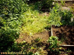 Огородные будни