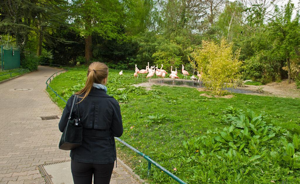 Фламинго гуляют сами по себе. Отзывы об экскурсии во франкфуртский зоопарк.