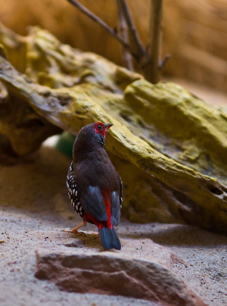 Птичка-невеличка. Съемка на Nikon D5100 и репортажный зум Nikon 17-55mm f/2.8 в зоопарке Франкфурта.