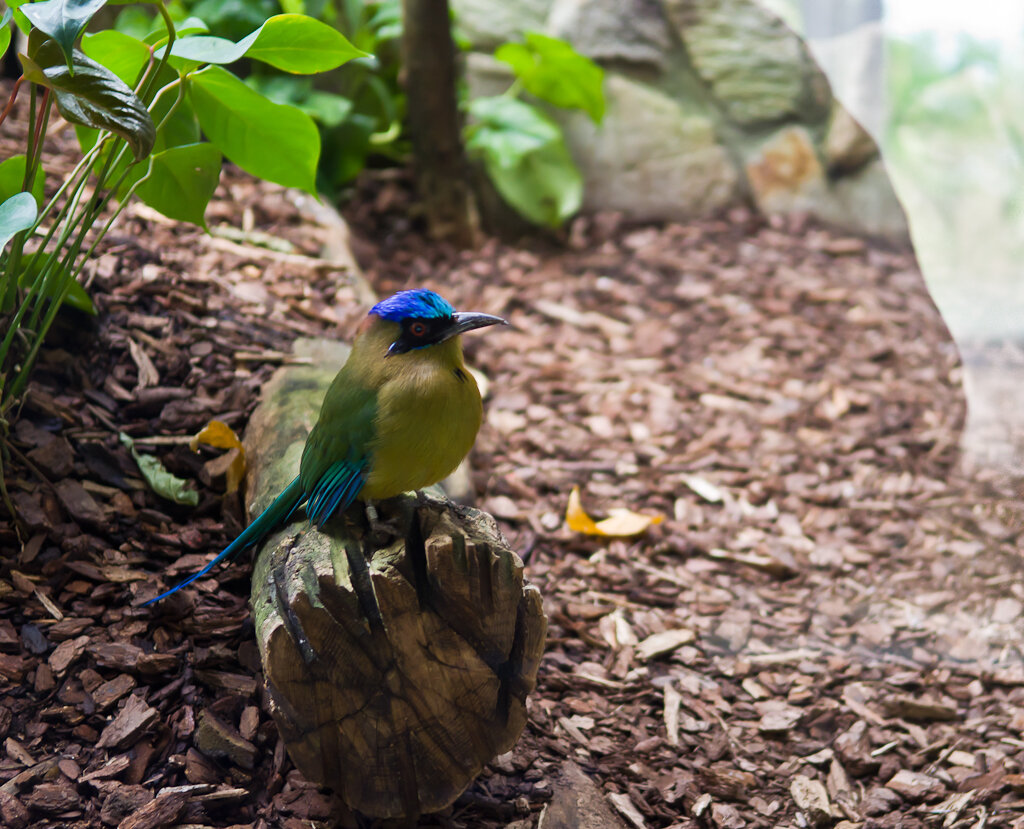 Серьезный парень. Репортаж об экскурсии в зоопарк Франкфурта-на-Майне.