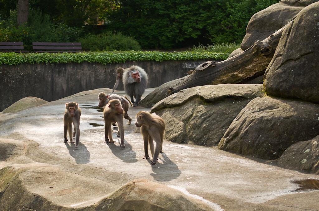 И снимать их на репортажный объектив Nikon17-55/2.8 не очень удобно. Поездка в зоопарк Франкфурта.