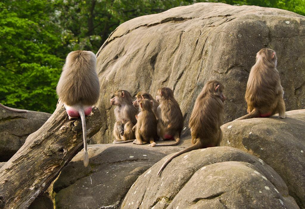 Фото 5. Экскурсия в зоопарк. Лектор и студенты