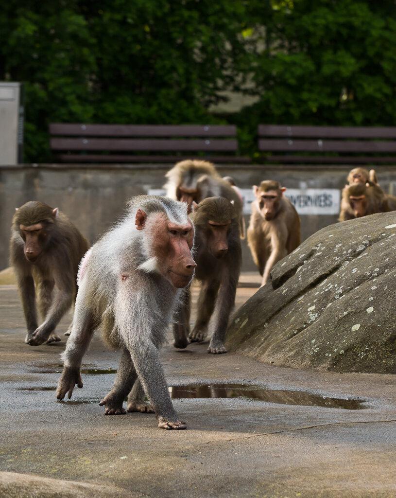Фото 7. Отзыв о посещении зоопарка во Франкфурте-на-Майне. Грозный...