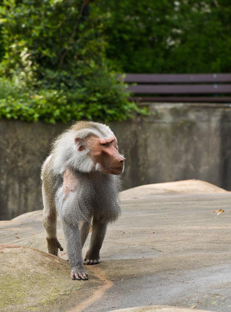 Фотография 8. Одиночка. Фоторепортаж об экскурсии в зоопарк Франкфурта-на-Майне.