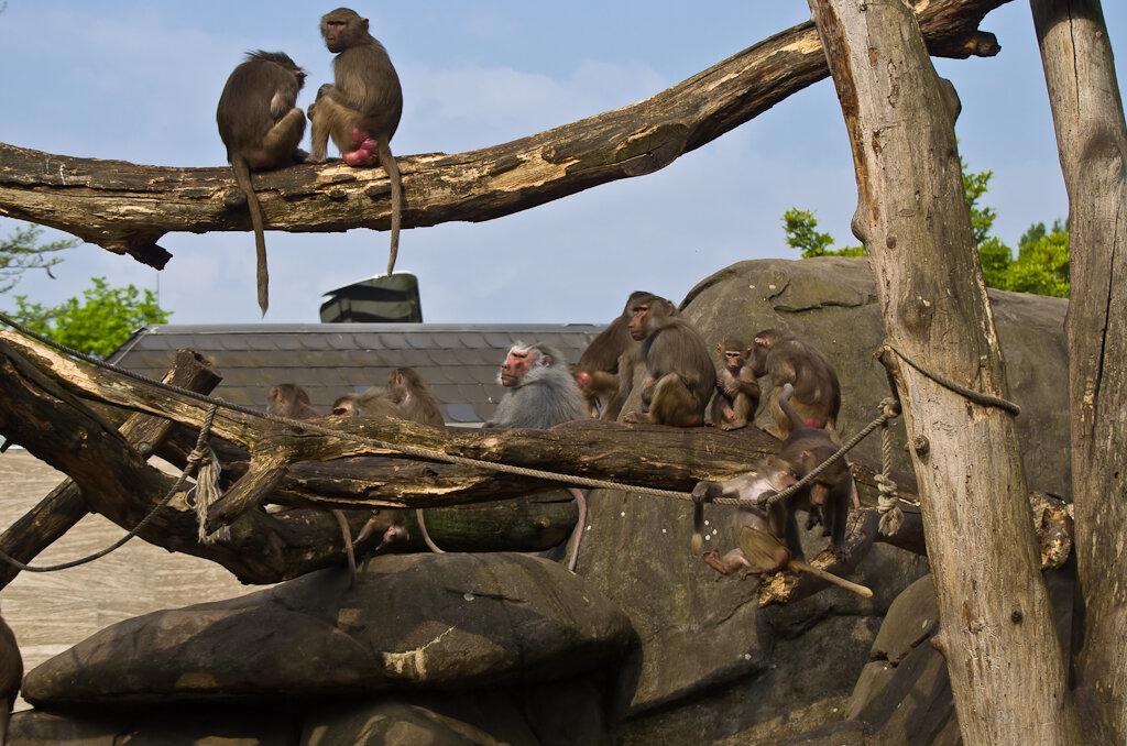 Снимок 9. Чем выше залезет обезьяна... Ну, дальше вы знаете. Экскурсия в зоопарк Франкфурта.
