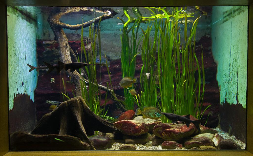 Фото 13. Фотографируем рыбок в аквариуме на Nikon D5100 и светосильный объектив Nikon 17-55/2.8