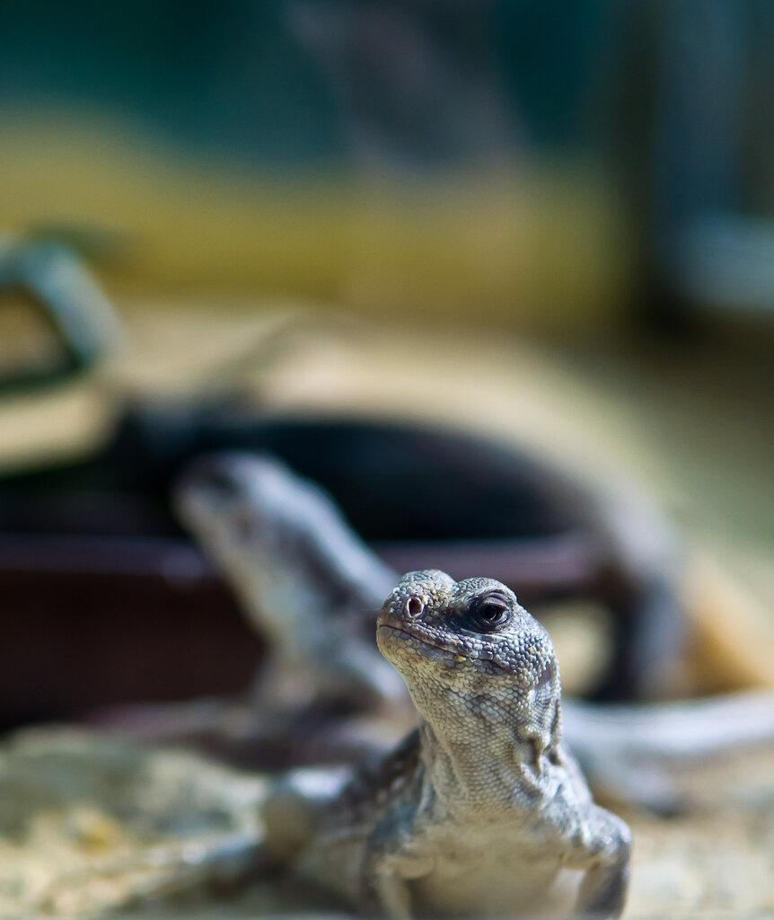 Фотография 16. Снято с рук через стекло на Nikon D5100 и линзу Nikon 17-55/2.8 во время экскурсии во франкфуртский зоопарк.