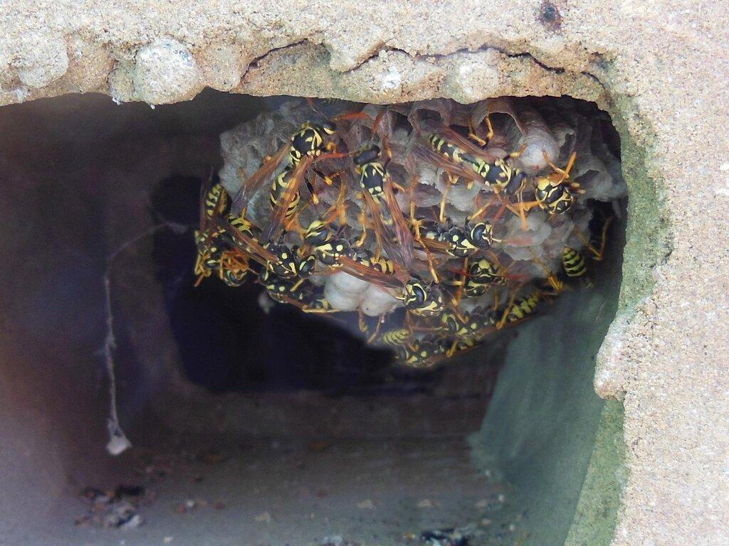 Осиное гнездо в шлакоблоке