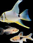 рыба (16).png