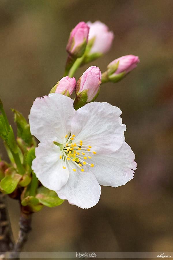 Я люблю все цветы, часть 44