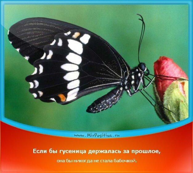 позитивчик дня - Если бы гусеница держалась за прошлое, она бы никогда не стала бабочкой