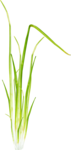 Bush and Grass  (145).png