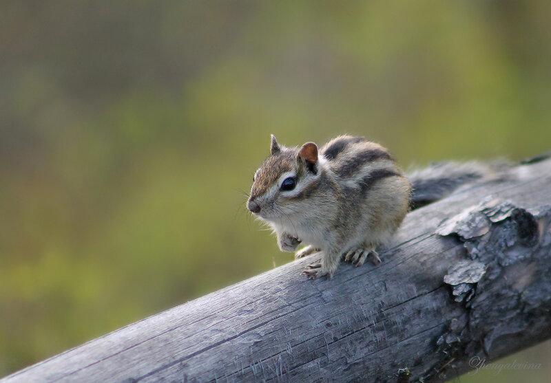 Слышите?...Кто-то мои орехи грызет!