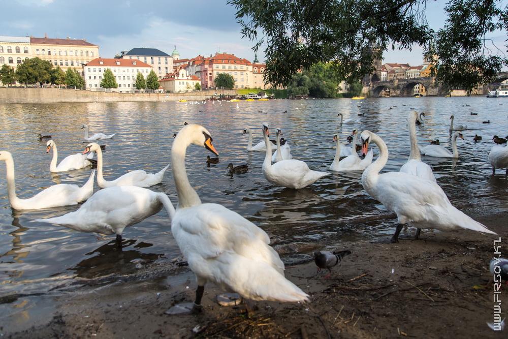 Prague 88.jpg