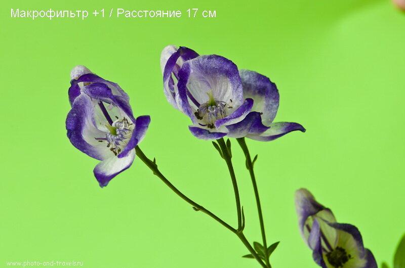 Фото 4. Действие линзы close up +1 почти не заметно на объективе Nikkor 18-55