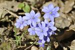 Весна нам дарит своё сердечко
