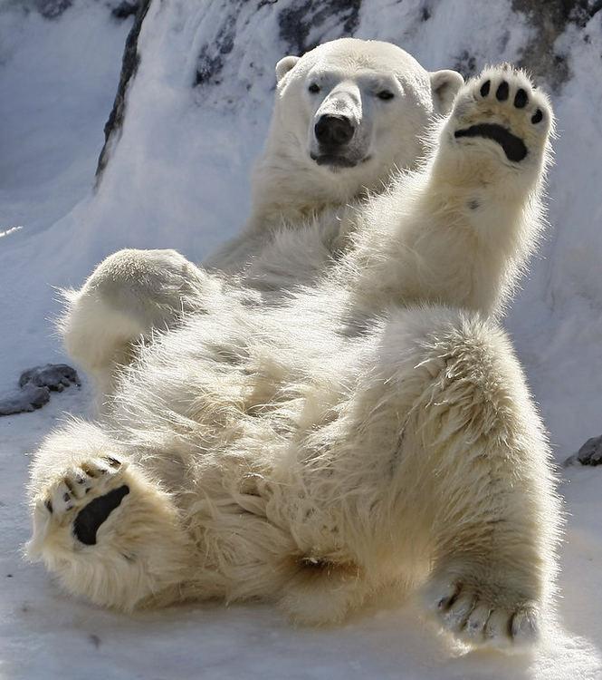 27 февраля - Международный день полярного медведя открытки фото рисунки картинки поздравления