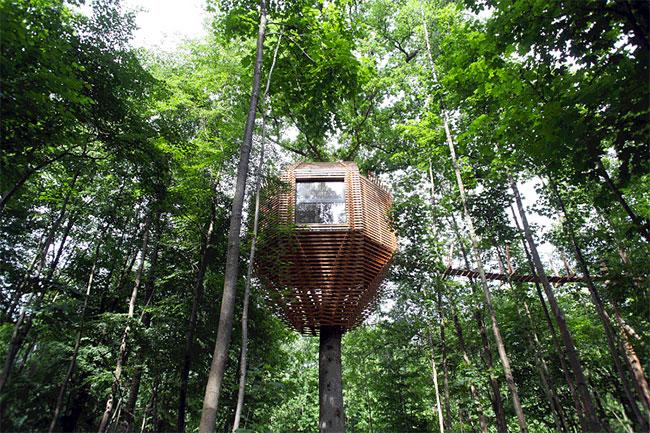 trees Houses housing house design instagram hotels hotel