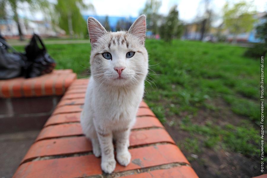 Любопытный котик в Чистополе