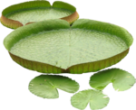 Holliewood_Topiary_Lilypads1.png
