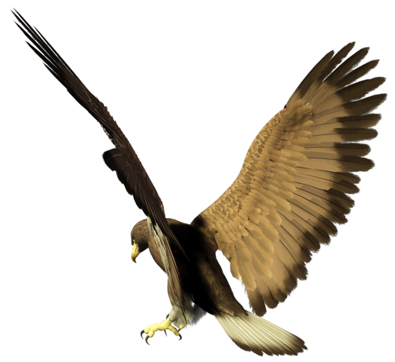 Орел картинка анимация, указ картинки открытки