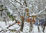 Зима из окошка...