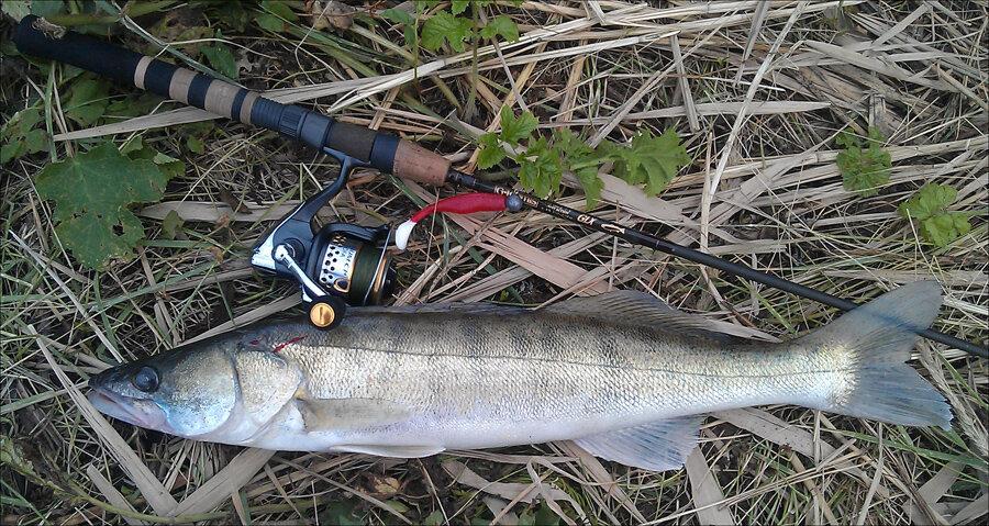 Изображение 1 : Во всемирный день рыболовства…