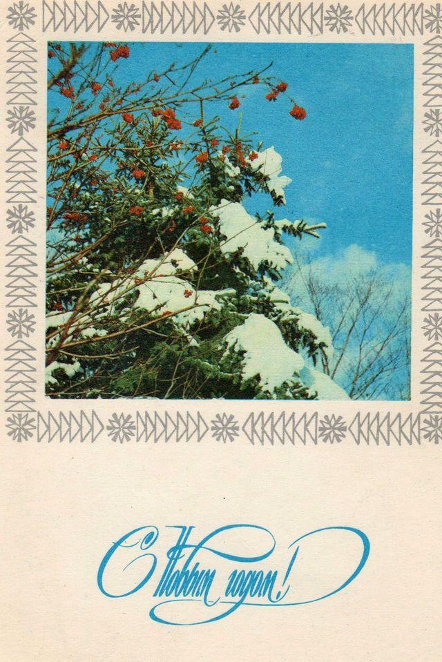 Ёль и рябина в лесу припорошены снегом. С Новым годом!