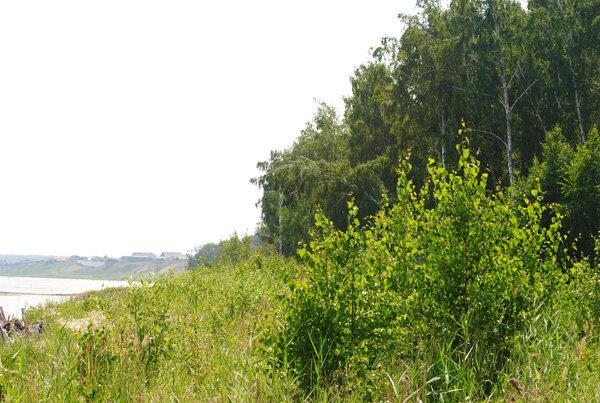 Лес окружает озеро