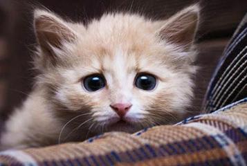 Что делать если котенок котенок ходит не в лоток фото