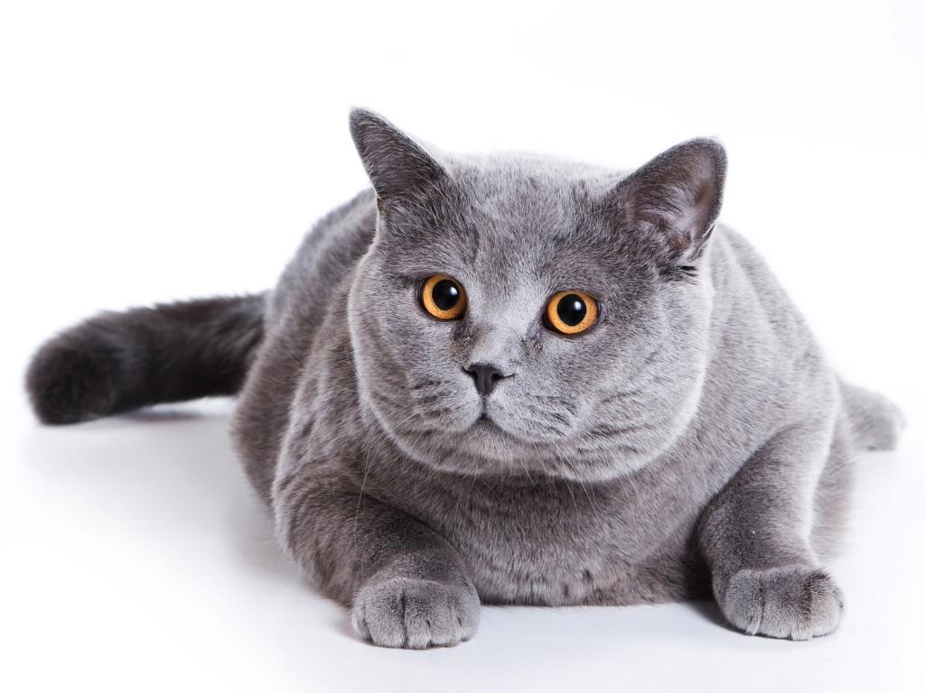 30 причин обменять жену на кошку (30 фото)